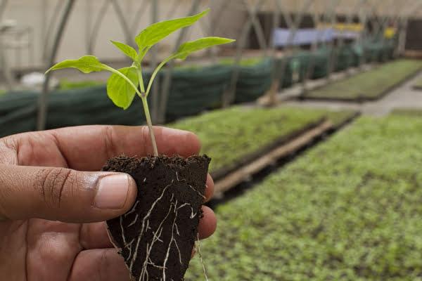 Boost Root Development