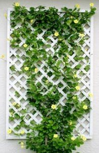 Caged Vertical Planter