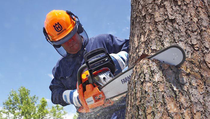 Chainsaw Cutting Tree