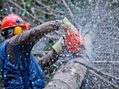 Chainsaw Noise – Protect Yourself and Vibration Hazards