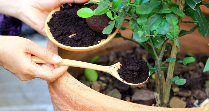 Coffee Grounds in Composting