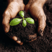 Compost Vs. Topsoil: Which is Better and When to Use?