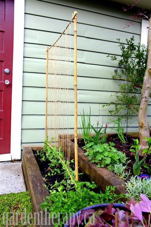 DIY Bamboo Pole Pea Trellis