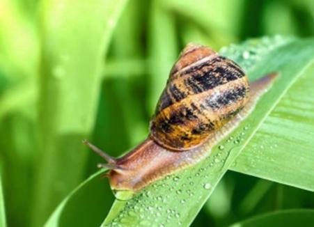 Deter Snails