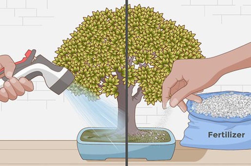 Feeding the Bonsai