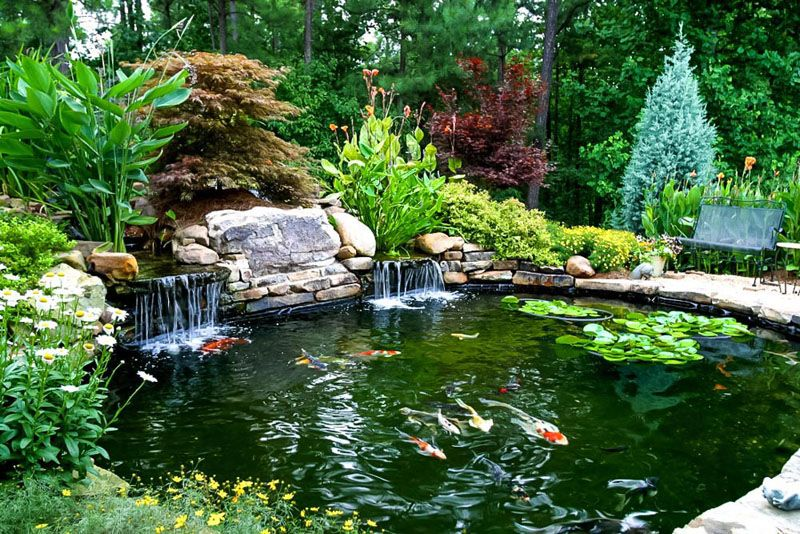 Fishpond or Koi Pond with a Beautiful Waterfall