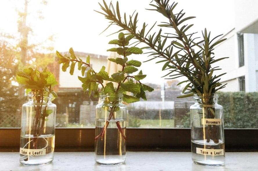 Garden for your Windowsill