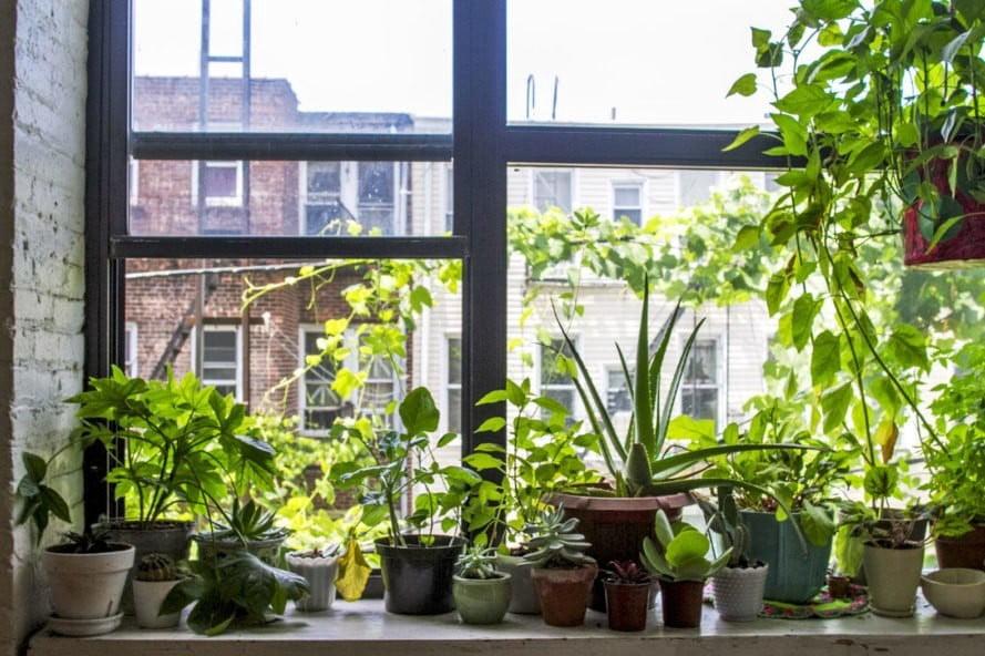 Garden in Front of Windows
