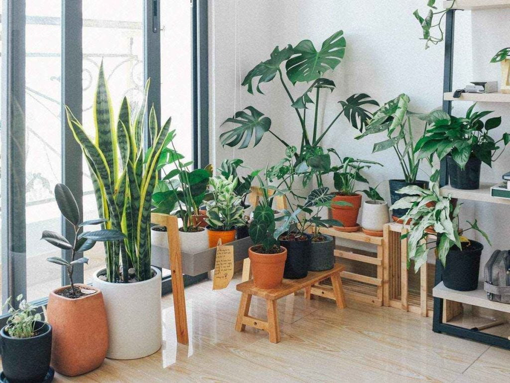 Garden in Front of your Balcony