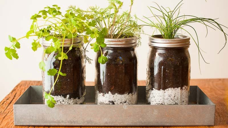 Garden of Recycled Jars