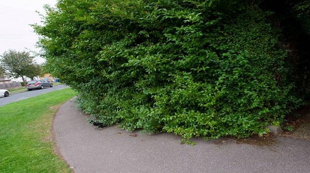 Glorious Overgrowth