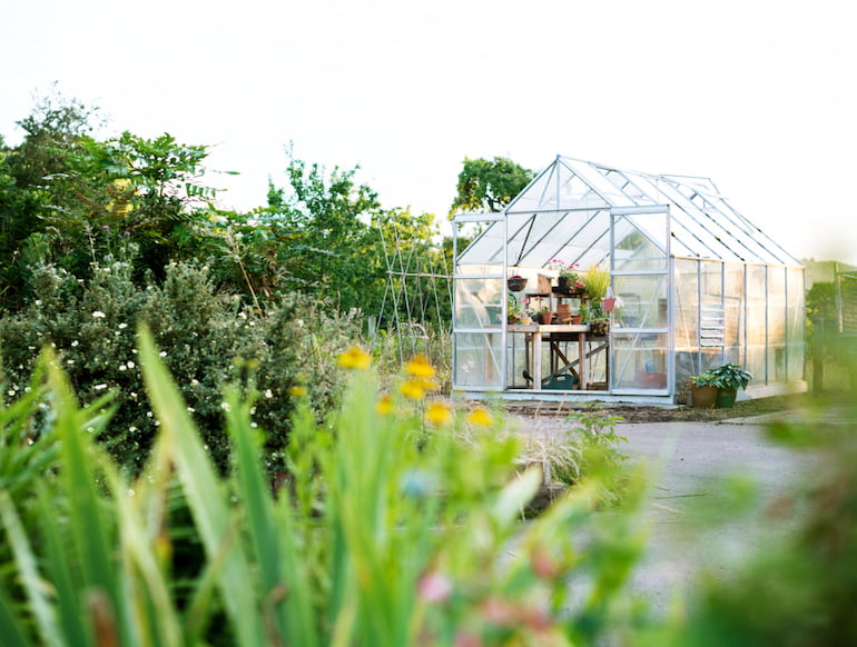 Greenhouse Supporting Wildlife