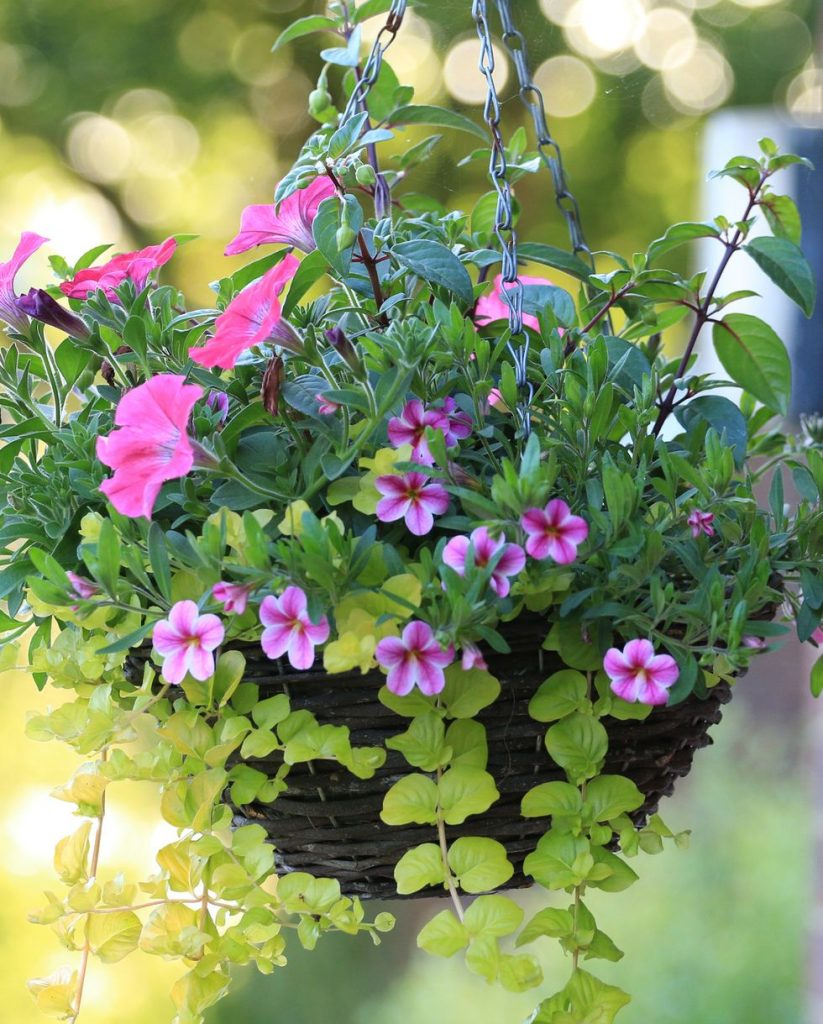 Hanging Containers