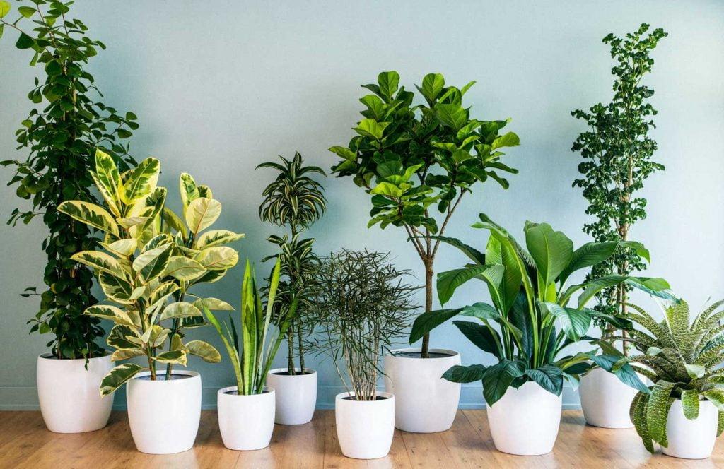 Harmonized Indoor Garden Idea