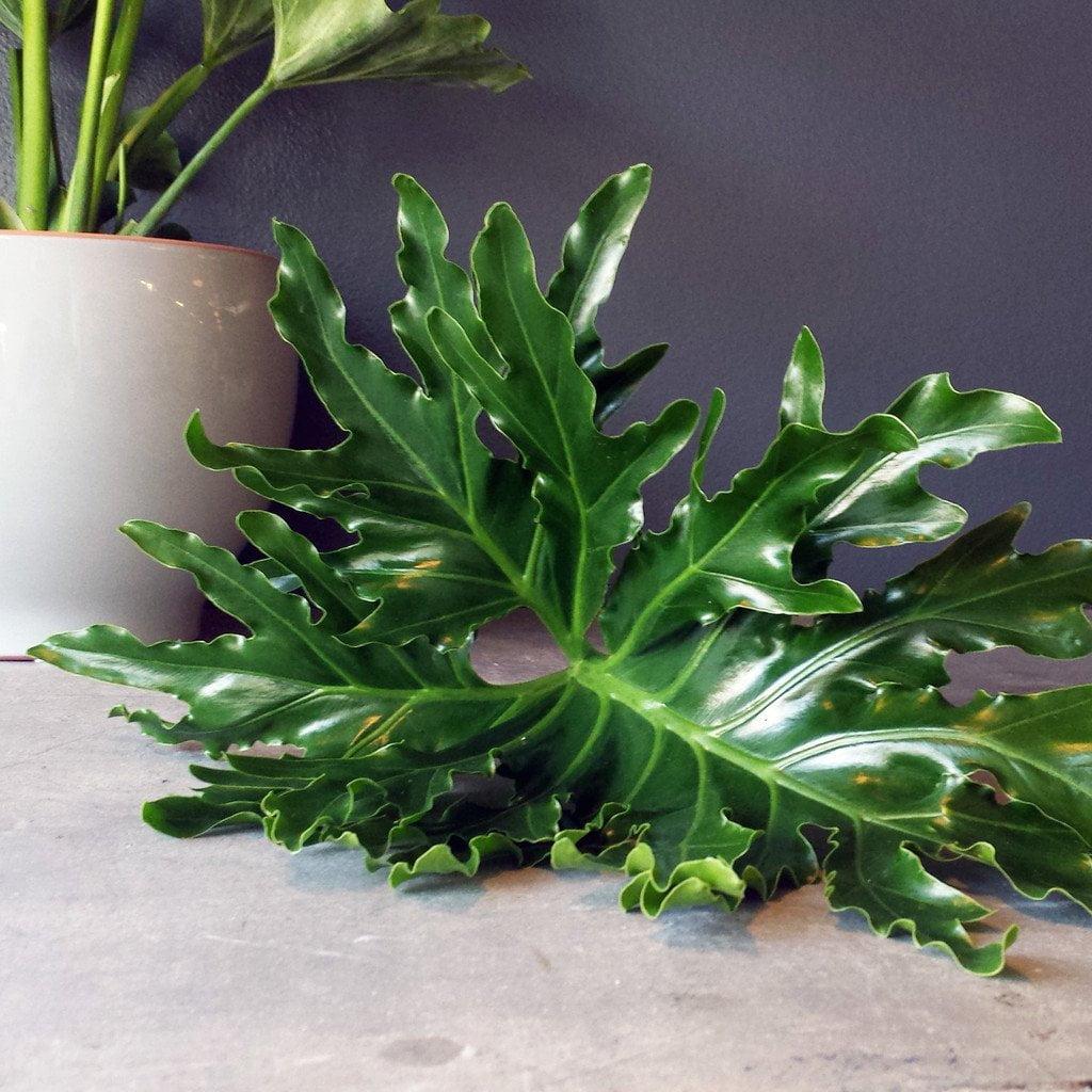 Hope Plant