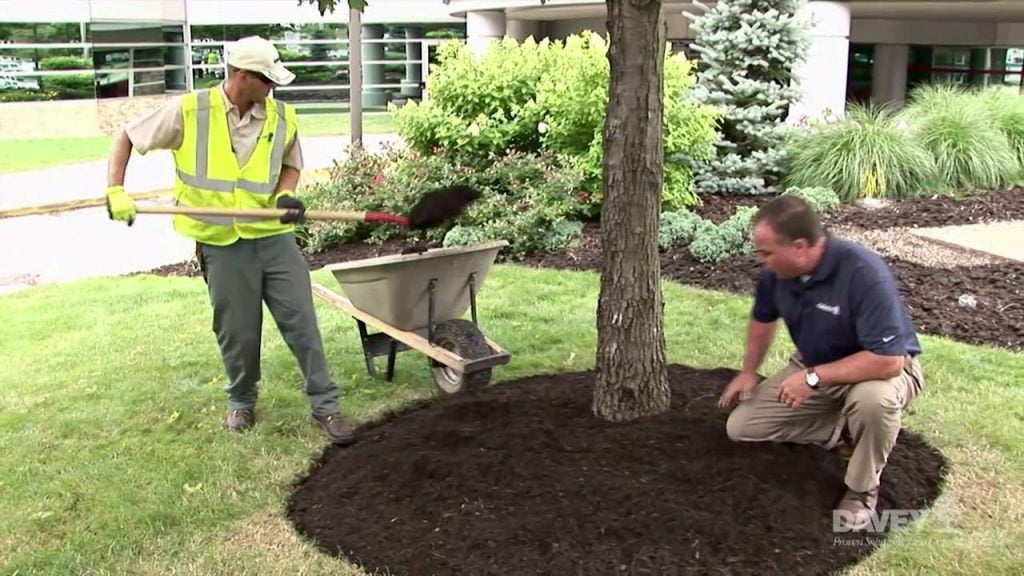 How Should Mulching Be Done