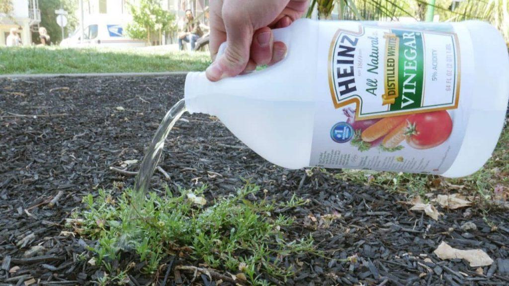 How to Apply Vinegar as Weed Killer