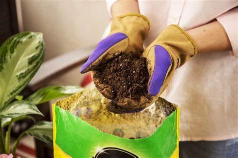 Non-Organic Potting Soil