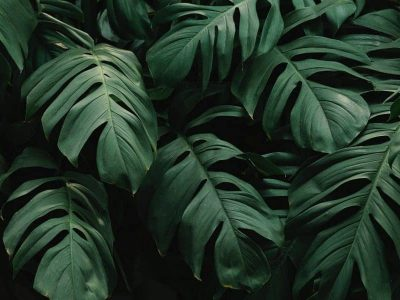 Philodendrons varieties and the type of care you need to take to grow them!