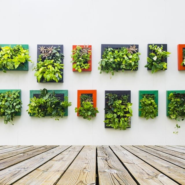 Plant Blocks for Walls
