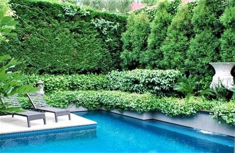 Pool garden hedges