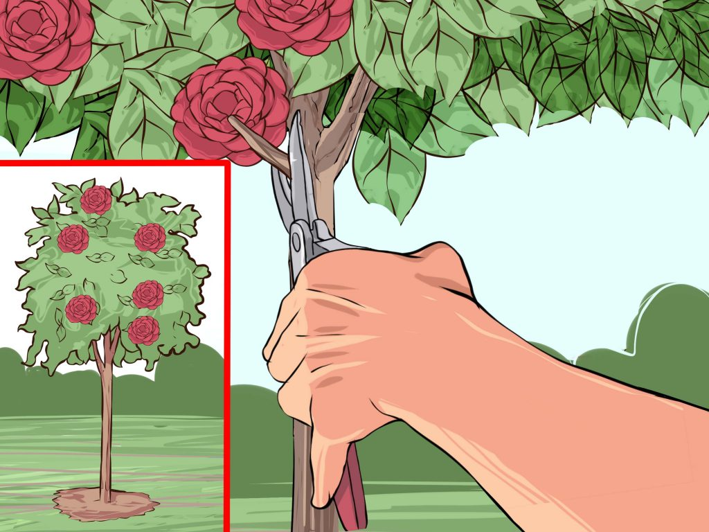 Pruning Camellias for Health and Disease Resistance