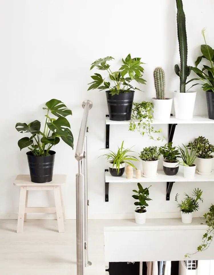 Shelf of life