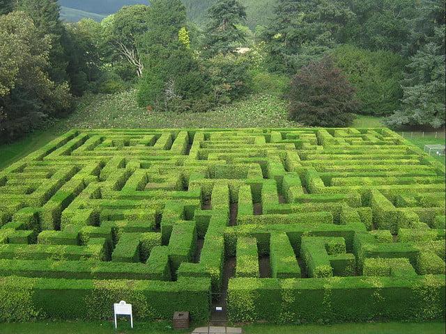Shrub Maze!