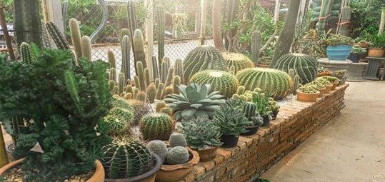 Significant dessert plant beds