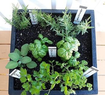 Simplified labeled Indoor Herb Garden Idea