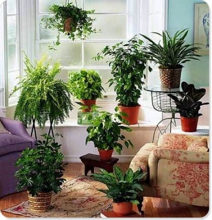 Stay Green in your Living Room
