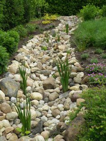 Add Plants to Your Dry Creek