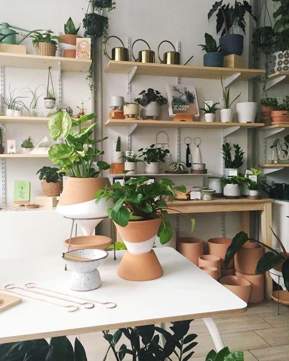 Suspended Plant Shelves