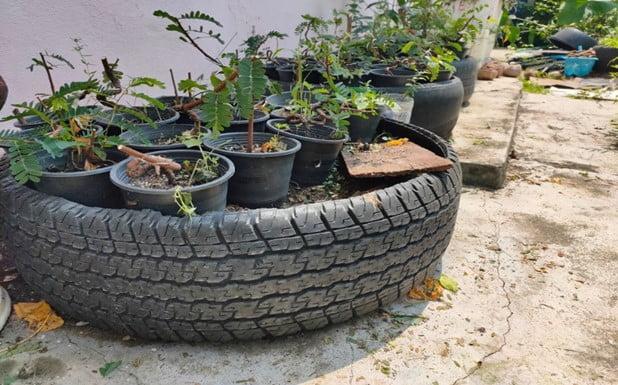 Terrace Tires