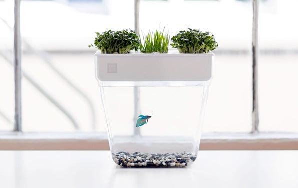 Water Tank Herb Garden