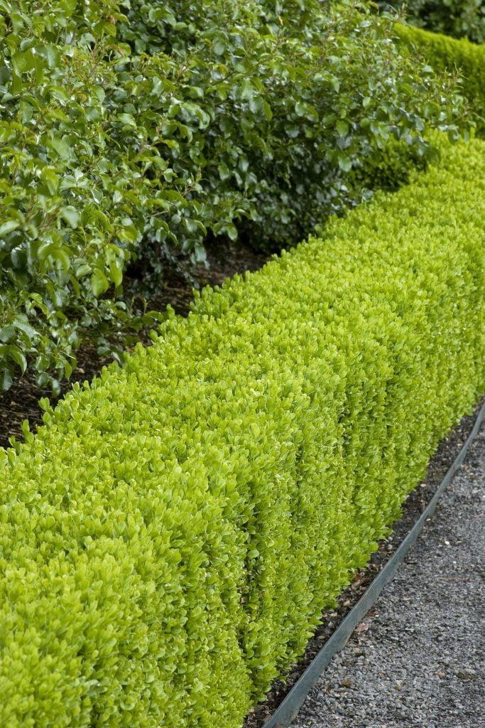 Wide Hedges