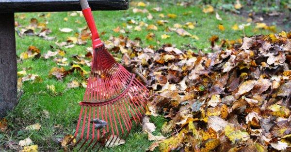 Wrong way to use leaf rake