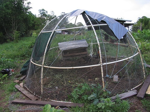 Dome-Shaped Coop