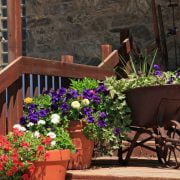 20 Best Wheelbarrow Planter Ideas
