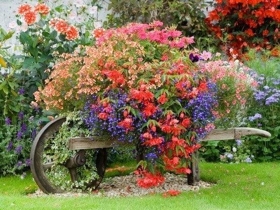 A Wheelbarrow Planter Full of Flourishing Bushes