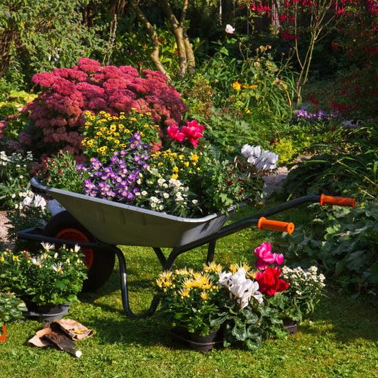 A Wheelbarrow Planter for Vertical Options