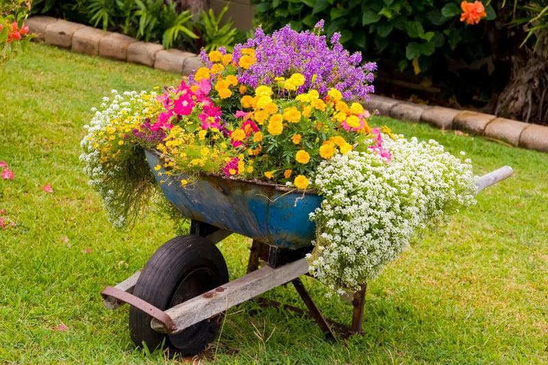 Overflowing Wheelbarrow for Long, Hanging Plants