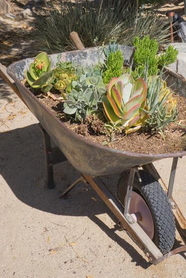 Rustic Wheelbarrow Planter for Succulents