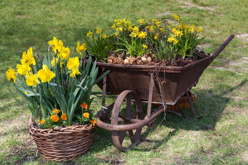 Shades of The Yellow Wheelbarrow to Brighten Your Garden