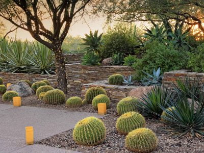 Desert landscaping - A switch from barren to thorny trees_Trees