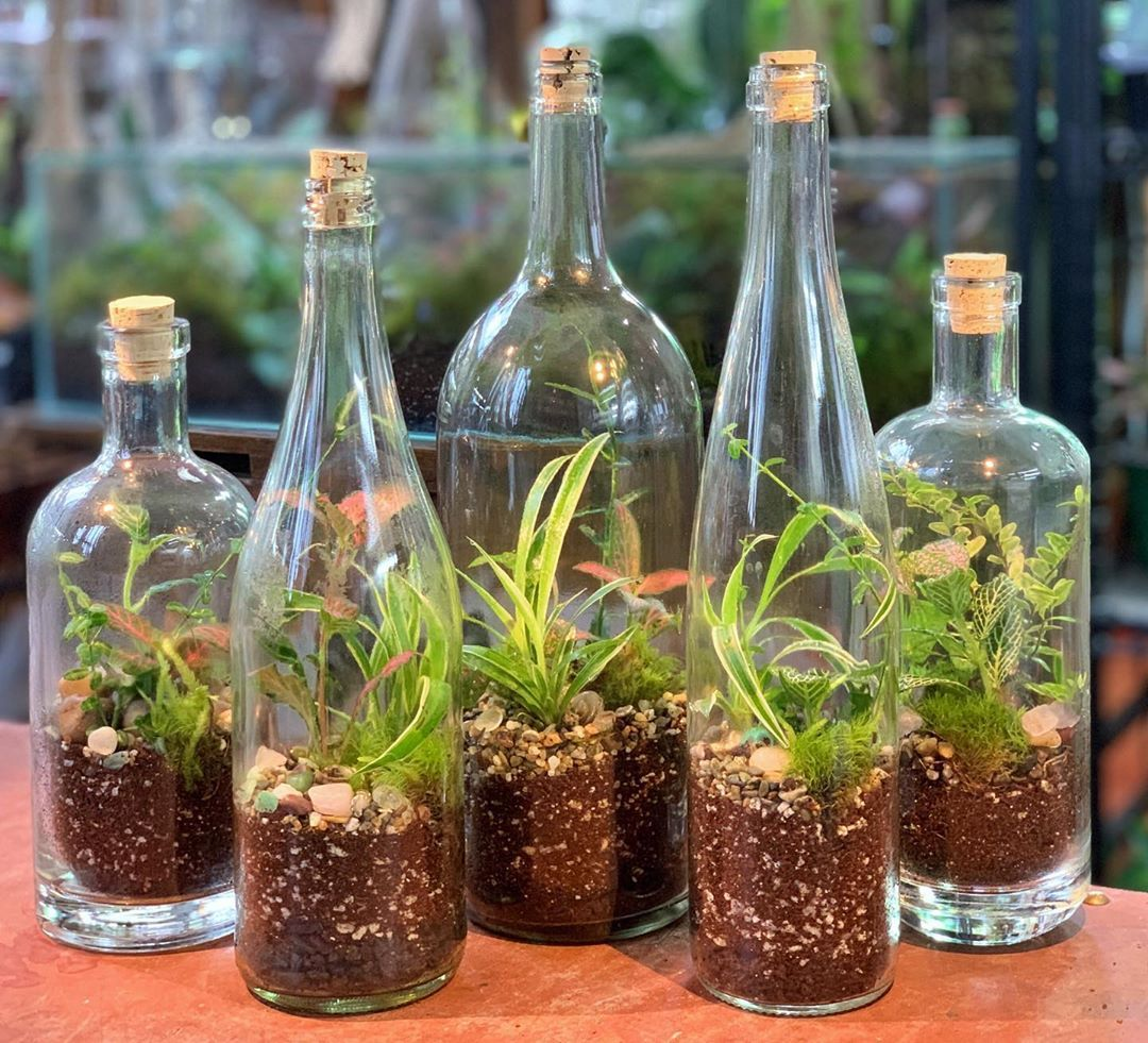 Examples of wine and whiskey bottle terraniums _ Pinterest