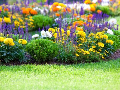 10 Easy to Grow Plants that Repel Fleas and Ticks