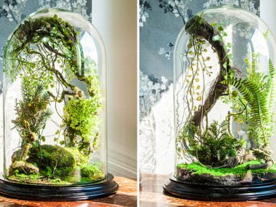 Tips and Tricks to Craft A Great Glass Jar Terrarium