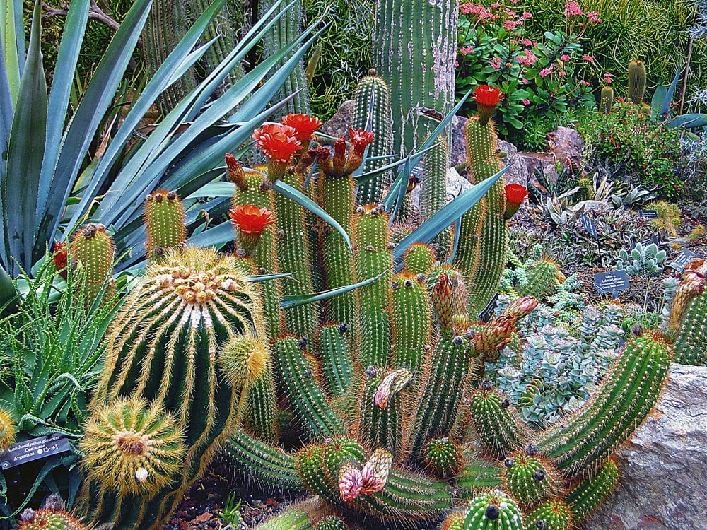 A combination of cacti and aloe for a desert landscape_LuxLivingAZ