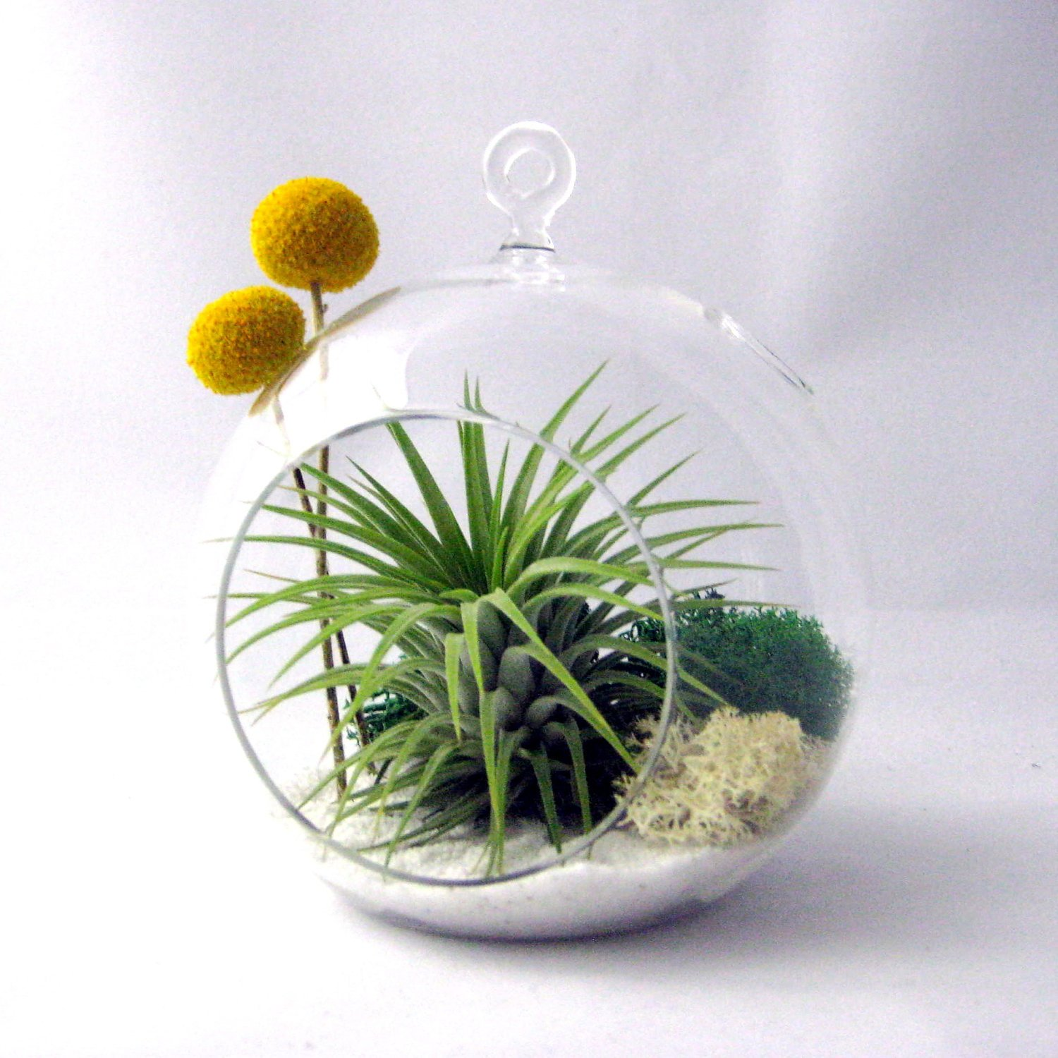 An example of a decorated terrarium adding splashes of yellow against minimalist white_Style Motivation